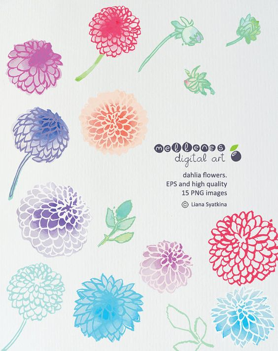 watercolor vector dahlia flowers. EPS and 15 high quality PNG.