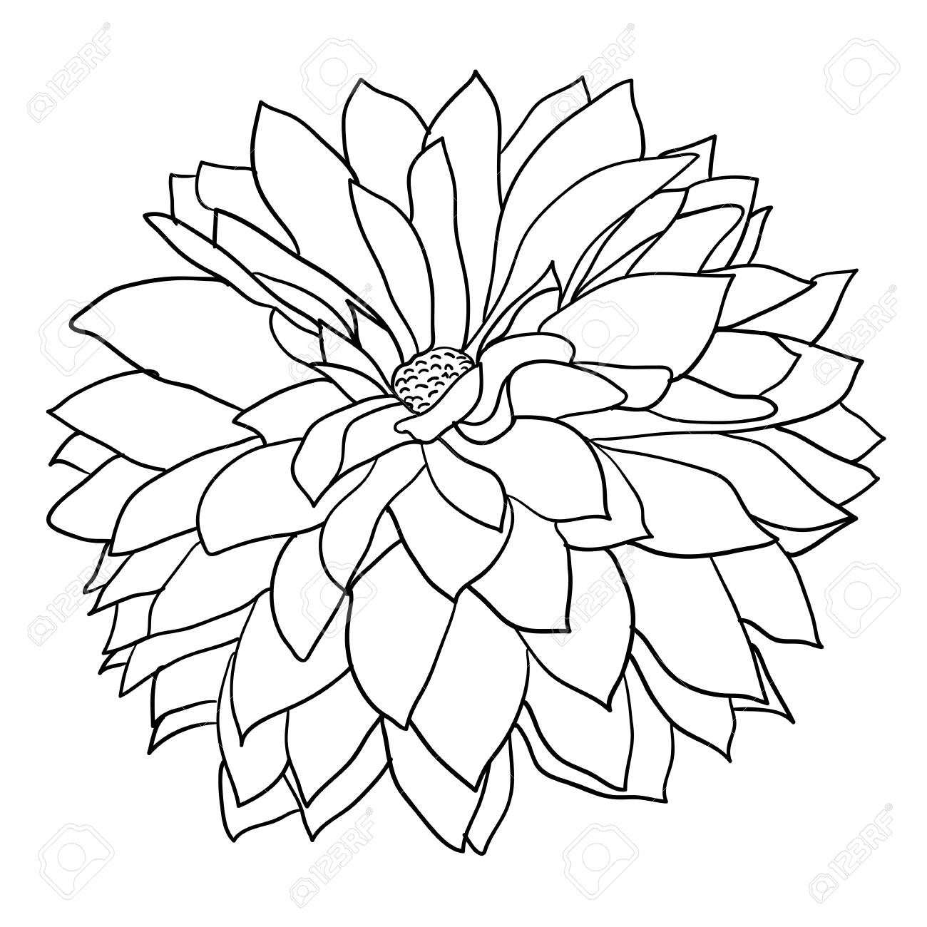 Beautiful monochrome sketch, black and white dahlia flower isolated..