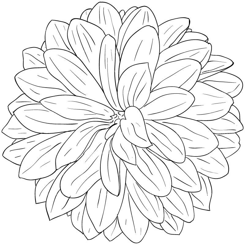 Dahlia Flower Outline Clipart.