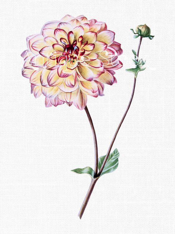Gardens, Art and Flower on Pinterest.