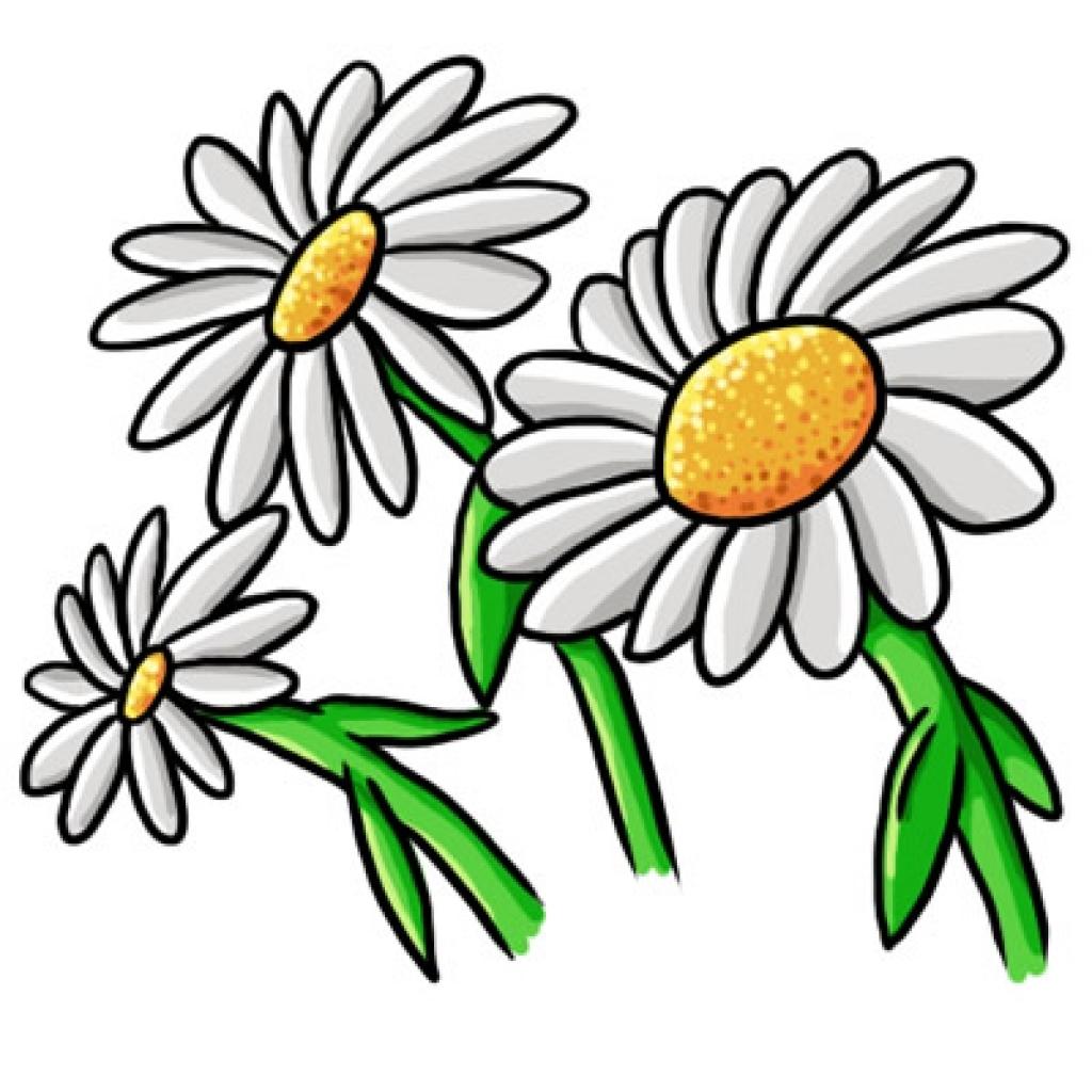 Daisy flower clipart.