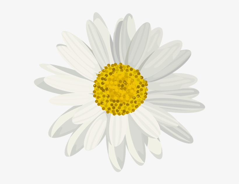 Art Images, Daisy, Clip Art, Art Pictures, Daisies,.