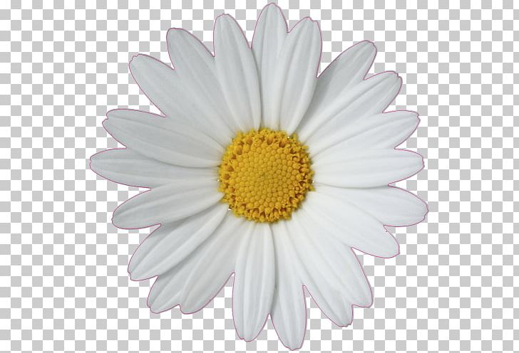 Common Daisy Daisy Chain Daisy Family PNG, Clipart, 3d Affixed Mural.