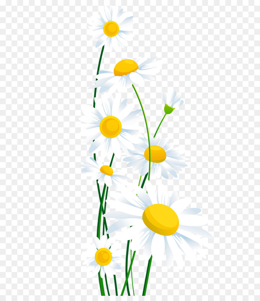 Daisy Clipart for printable.