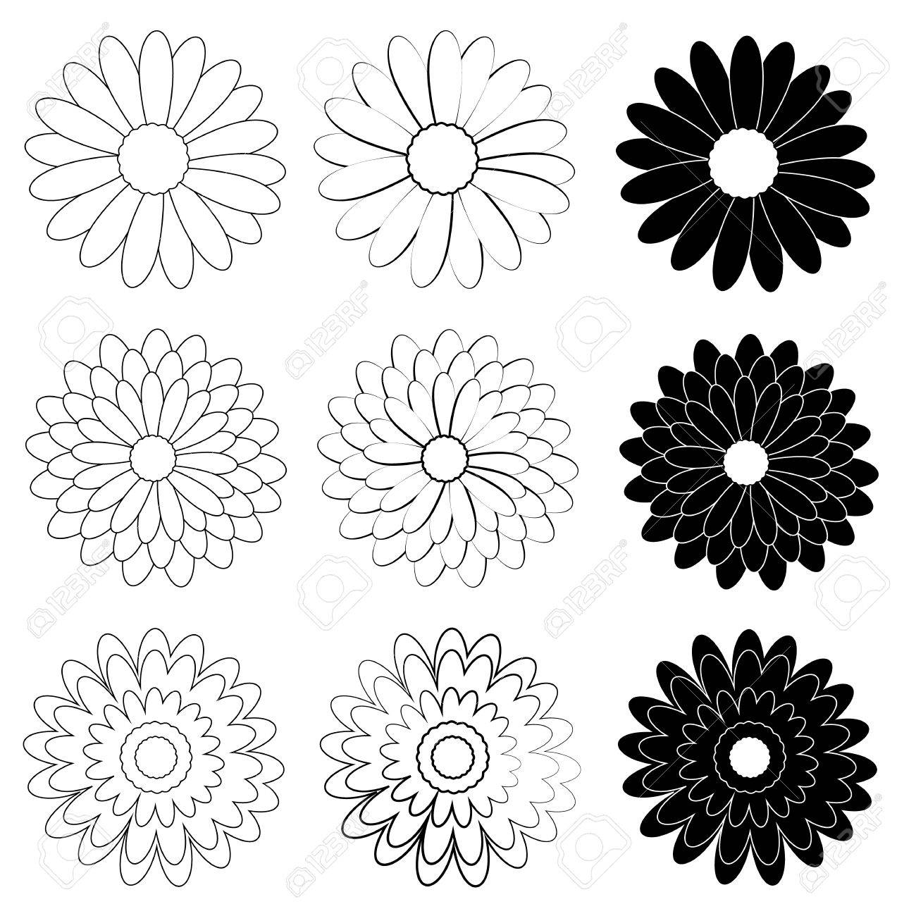 Black and White Daisy flower on white background.
