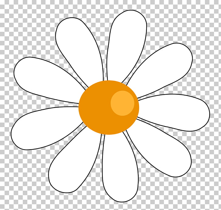 Free content Common daisy , Cute Daisy s PNG clipart.