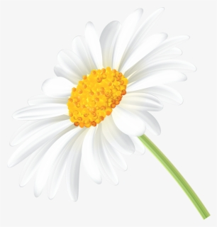 Free Daisy Images Clip Art with No Background.