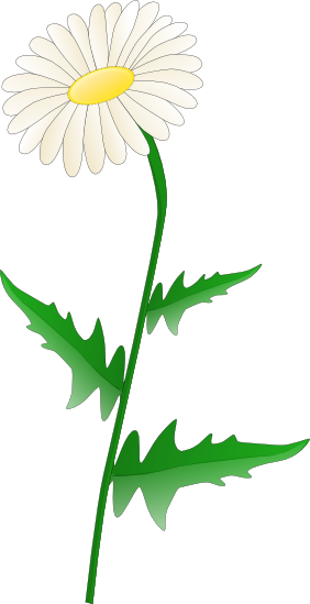 Free Transparent Daisy Cliparts, Download Free Clip Art.
