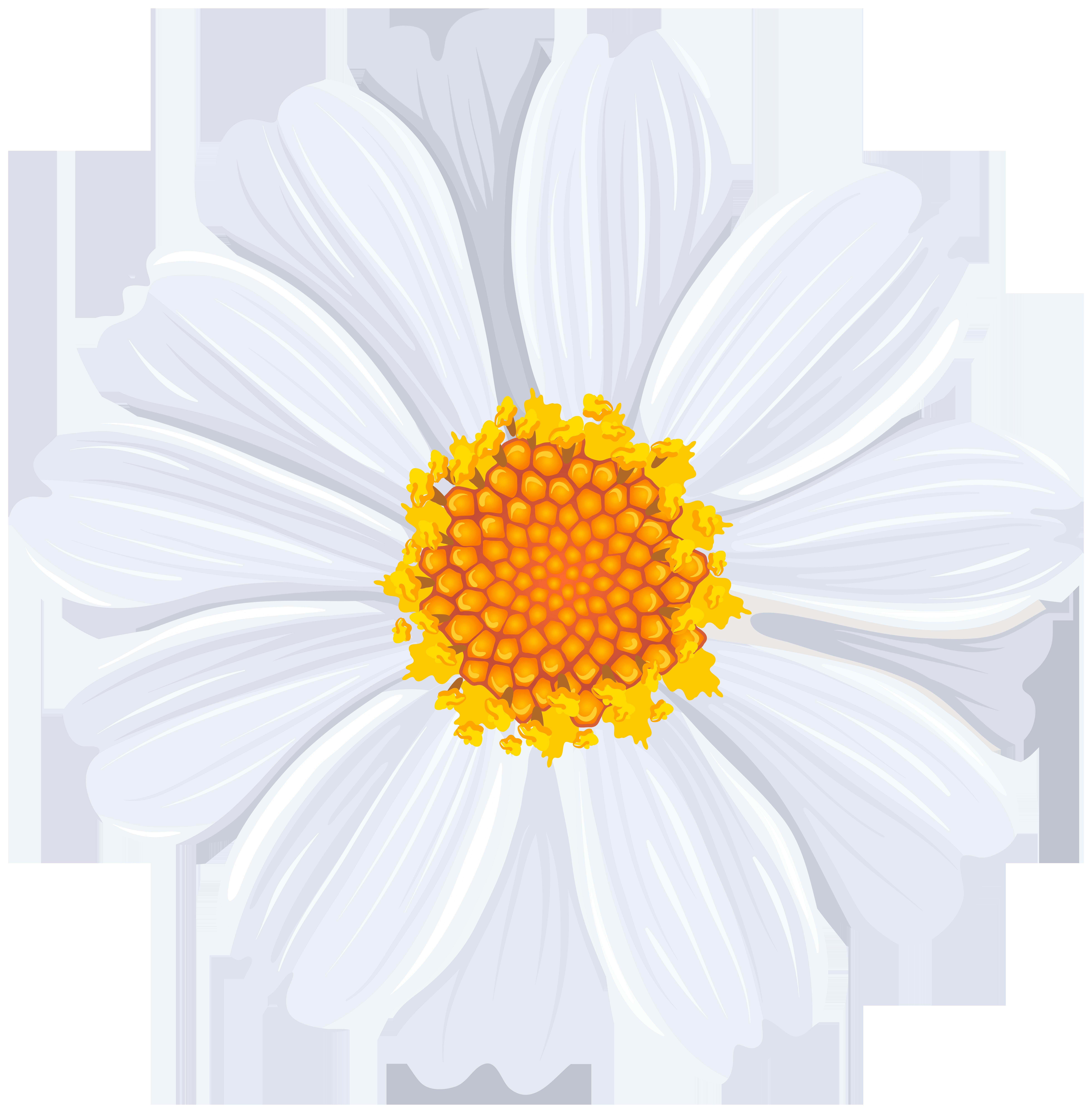 White Daisy PNG Transparent Clip Art Image.