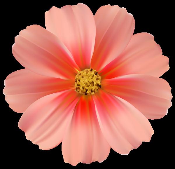 Orange Daisy PNG Clipart Image.
