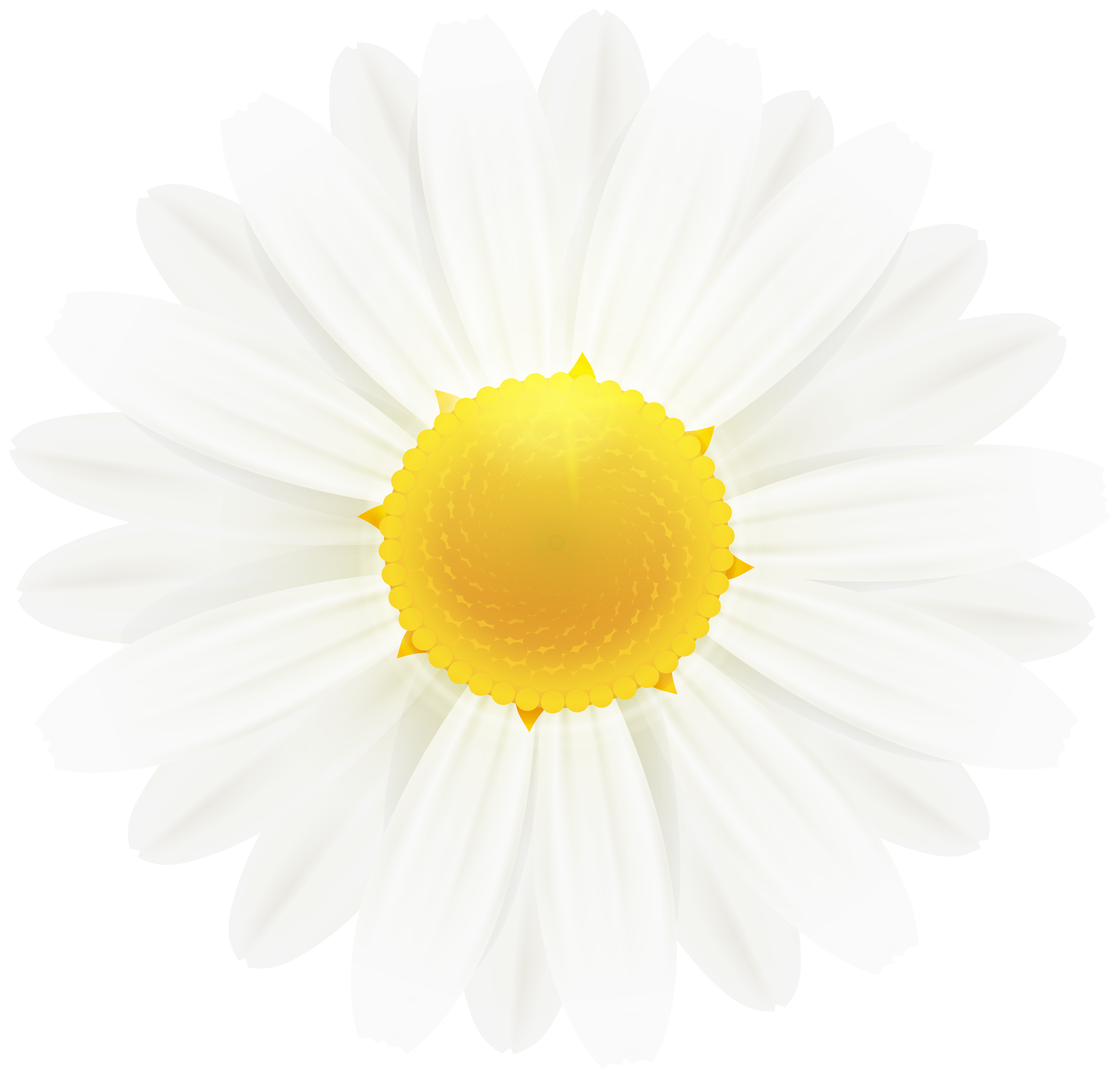 daisy flower clipart 20 free Cliparts   Download images on ... (8000 x 7696 Pixel)