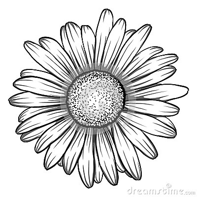 Daisy Drawing Outline at PaintingValley.com.