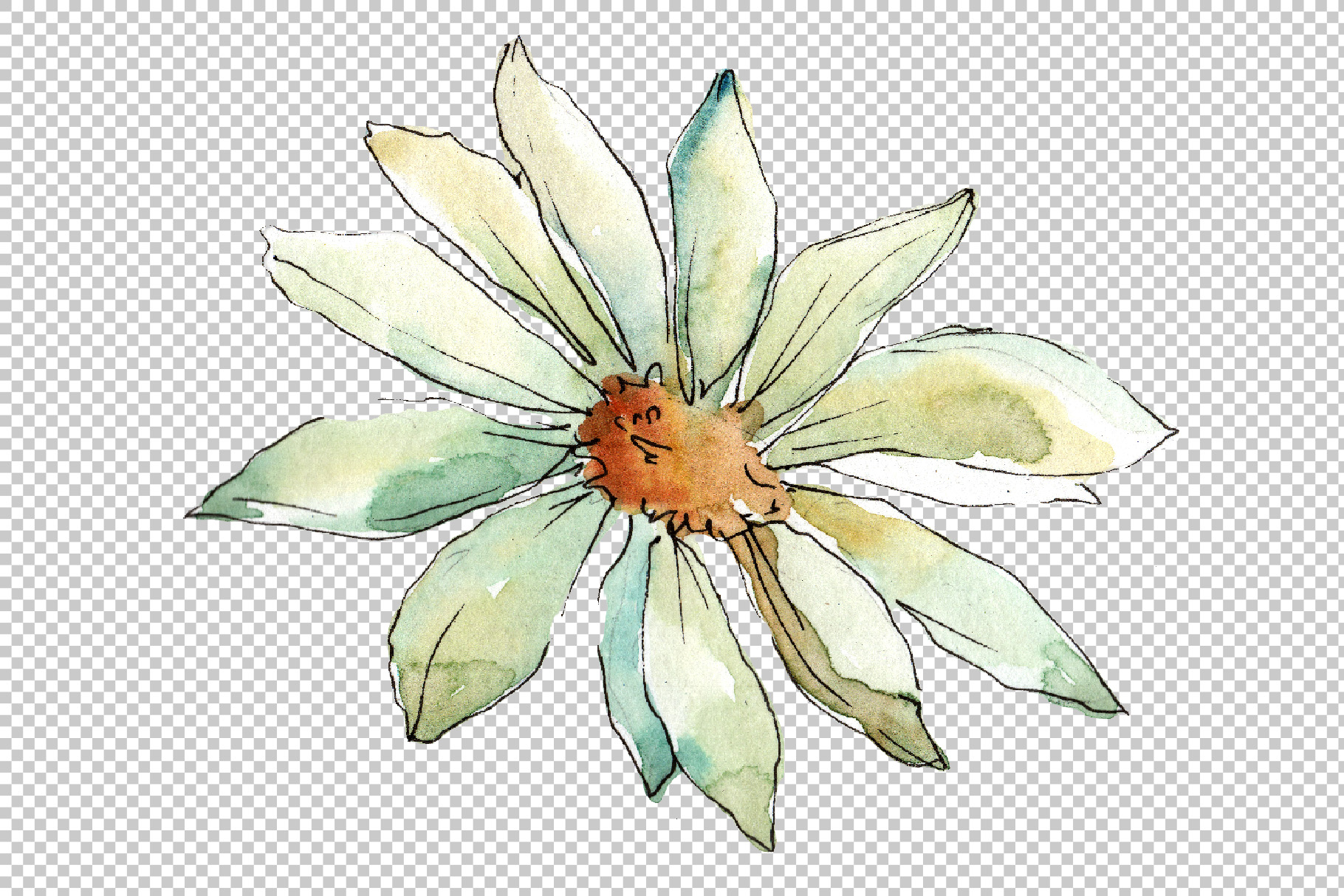 White daisy PNG watercolor flower set.