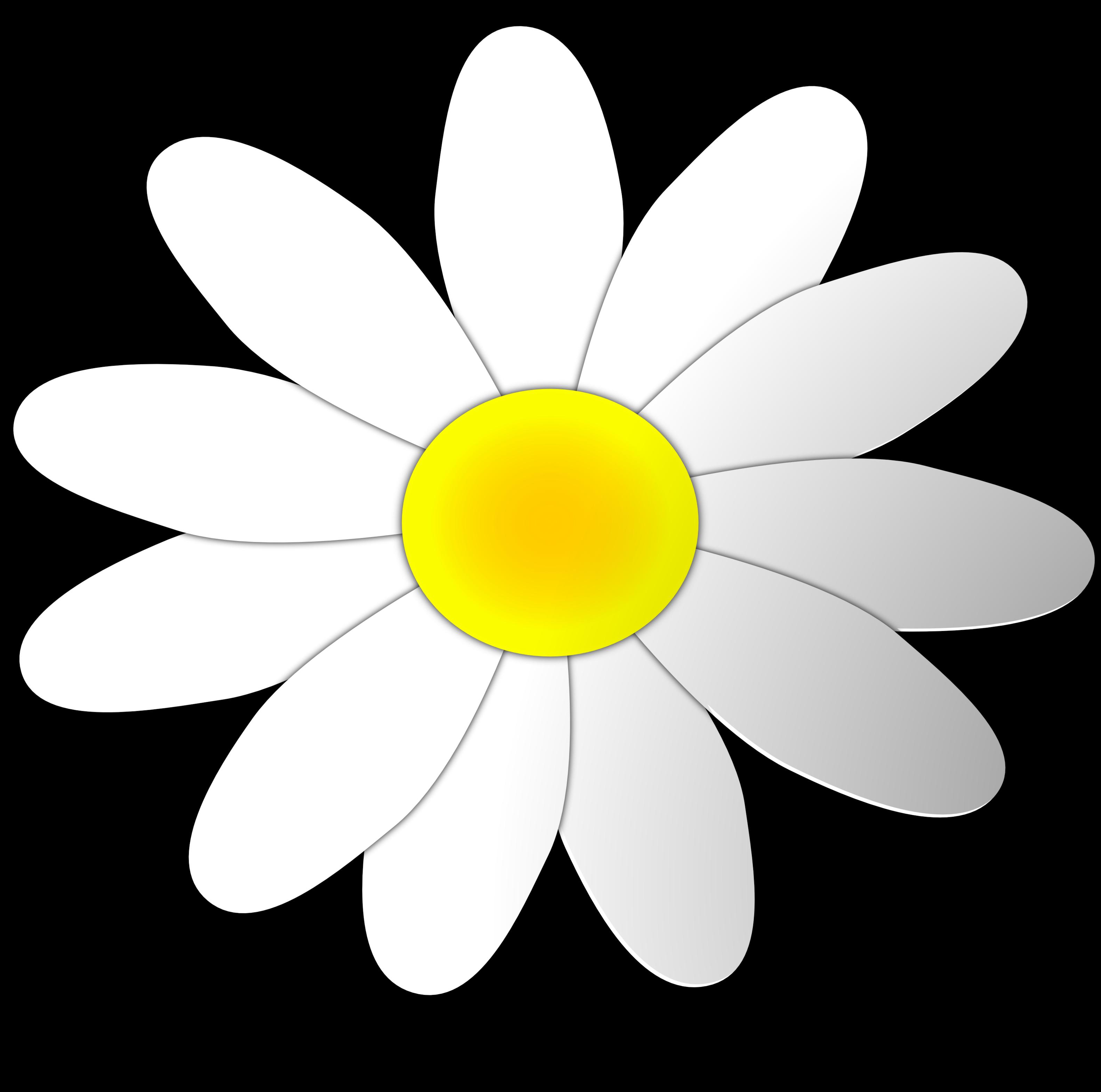 Clipart bunga daisy.