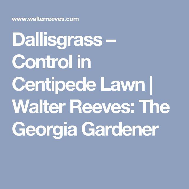1000+ ideas about Centipede Grass on Pinterest.