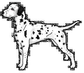 Dalmatian Clipart.