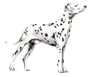 Free Dalmatian Cliparts, Download Free Clip Art, Free Clip Art on.