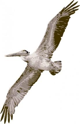 Pelican Clip Art Download.