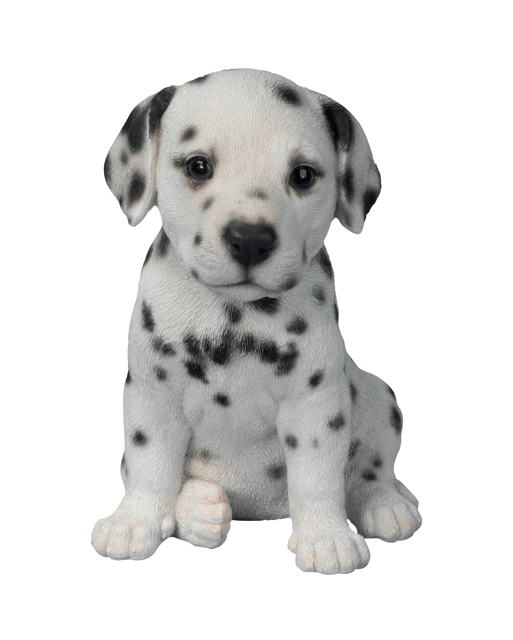 Dalmatian Puppy transparent PNG.