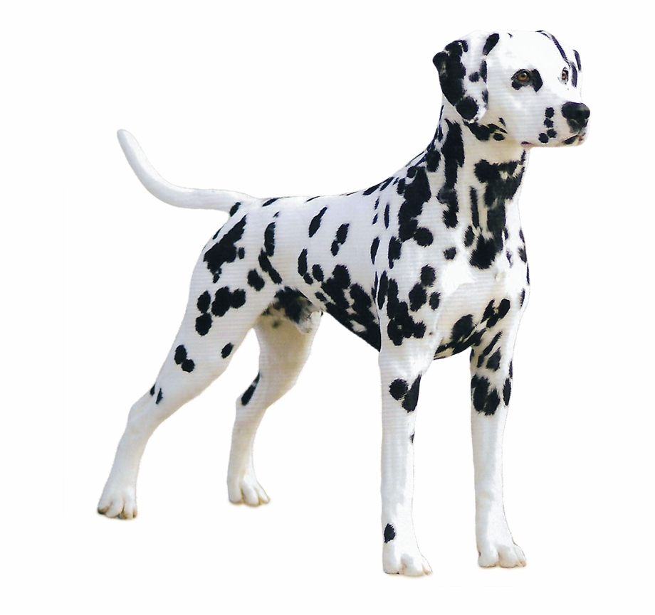 Dalmatian Great Dane , Png Download.