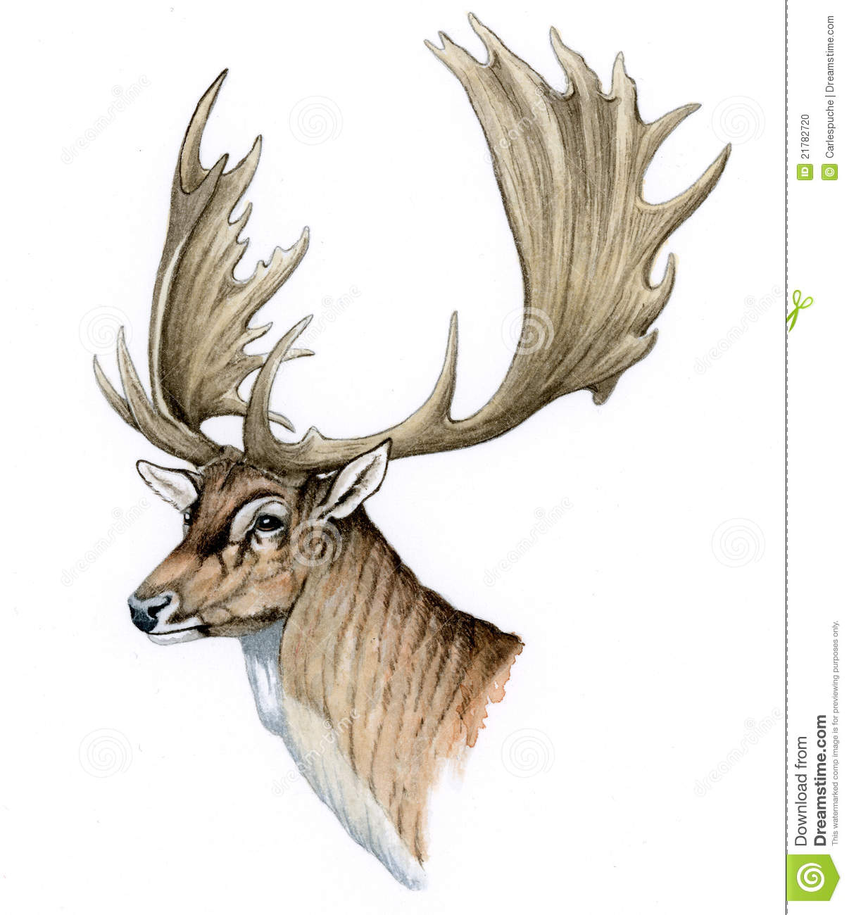Fallow Deer Female Head (Dama Dama) Stock Photo.