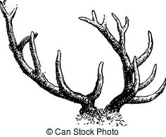 Clipart Vector of Fallow Deer or Dama dama, vintage engraving. Old.