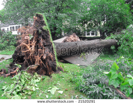 Broken Tree Stock Photos, Royalty.