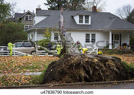 Tree damage clipart.