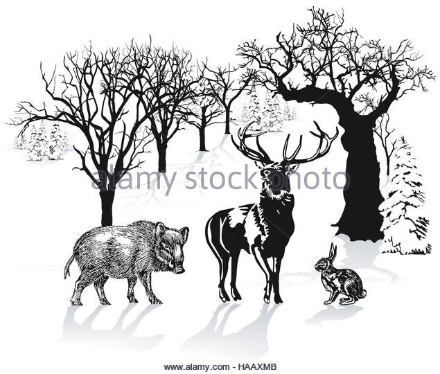 Boar Hunters Stock Photos & Boar Hunters Stock Images.