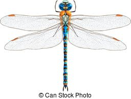 Damselfly Illustrations and Clipart. 477 Damselfly royalty free.
