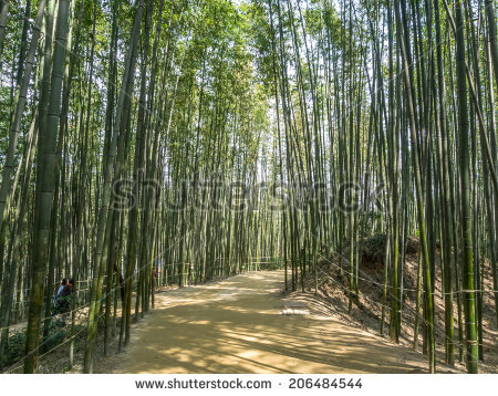 Bamboo Dense Path Stock Photos, Royalty.