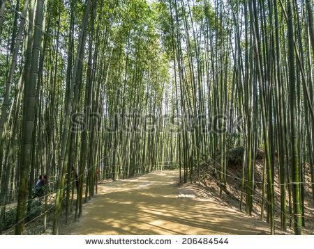 Bamboo Dense Path Stock Photos, Royalty.