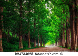 Damyang Images and Stock Photos. 174 damyang photography and.