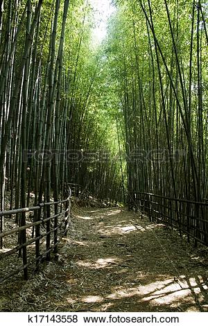 Pictures of Beautiful bamboo forest in south korea Damyang.