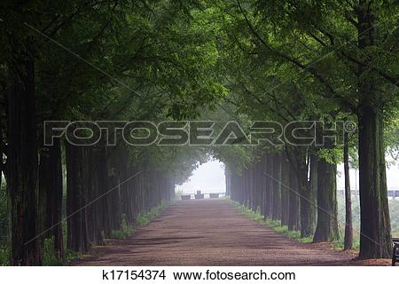 Stock Photo of South Korea beautiful green forest trails Damyang.