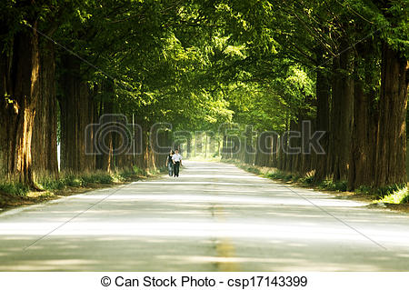 Stock Photographs of Damyang beautiful forest trails in South.