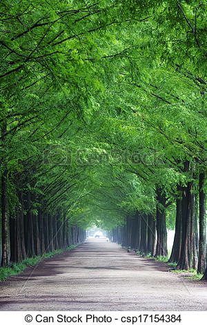 Pictures of South Korea beautiful green forest trails Damyang.