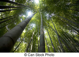 Stock Photo of Beautiful bamboo forest in south korea Damyang.