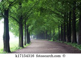 Damyang forest road Images and Stock Photos. 43 damyang forest.