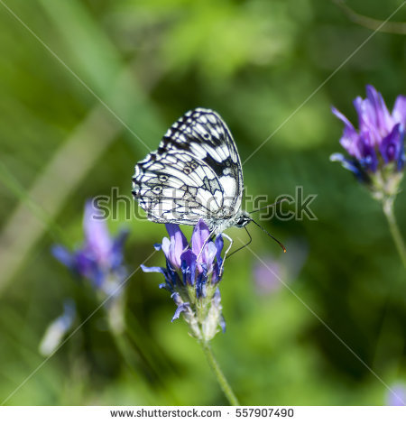 Nymphalidae Stock Photos, Royalty.