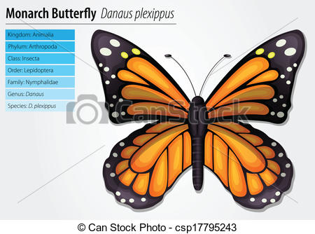 EPS Vector of Monarch butterfly.
