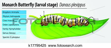 Clipart of Monarch butterfly.