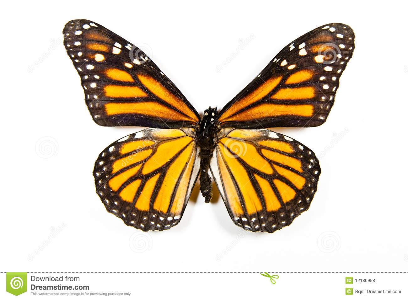 Butterfly Danaus Plexippus Isolated Royalty Free Stock Photos.