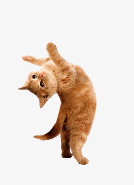 Dancing Cat PNG, Clipart, Animal, Cat Clipart, Cute, Cute.