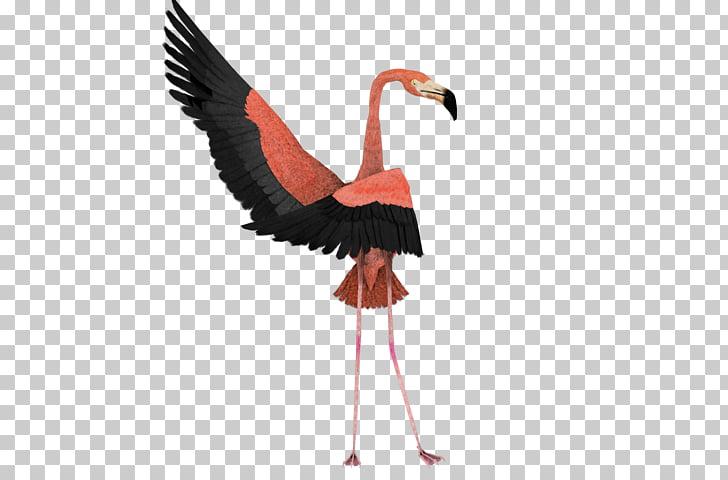 Dance Art Flamingo Bird , flamingo PNG clipart.