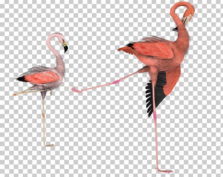 Bird Flamingo Art PNG, Clipart, Animals, Art, Beak, Bird.