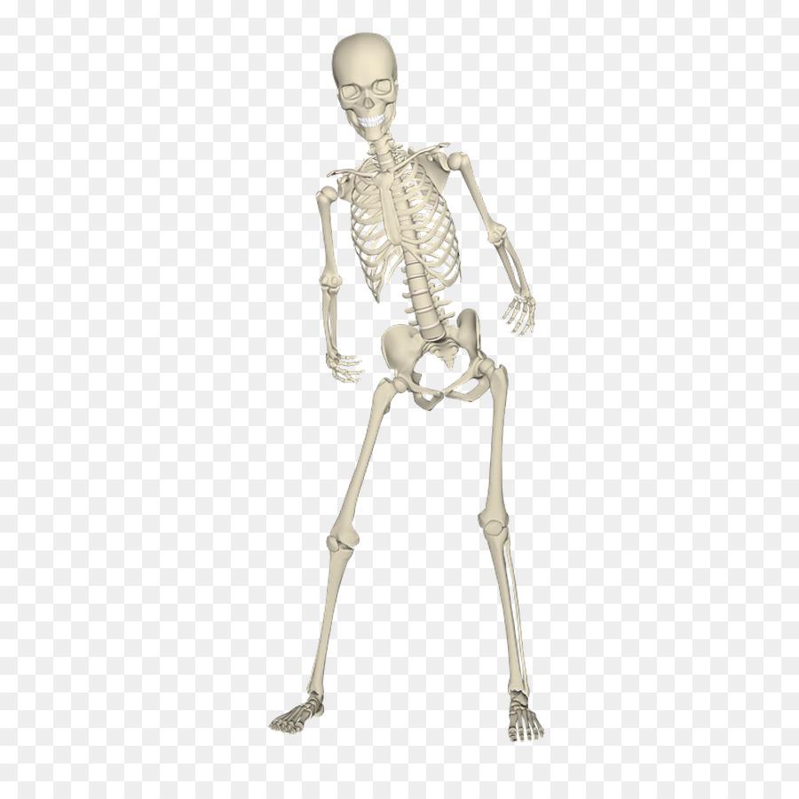 Skull Anatomy png download.
