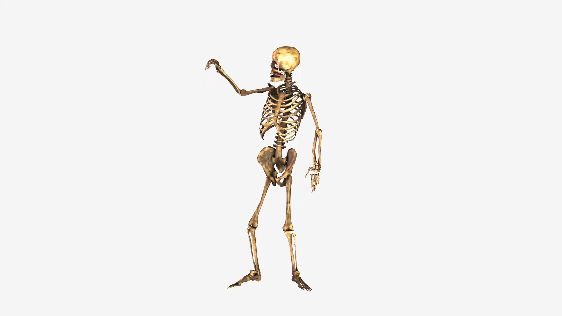 Dancing Skeleton Png (113+ images in Collection) Page 1.