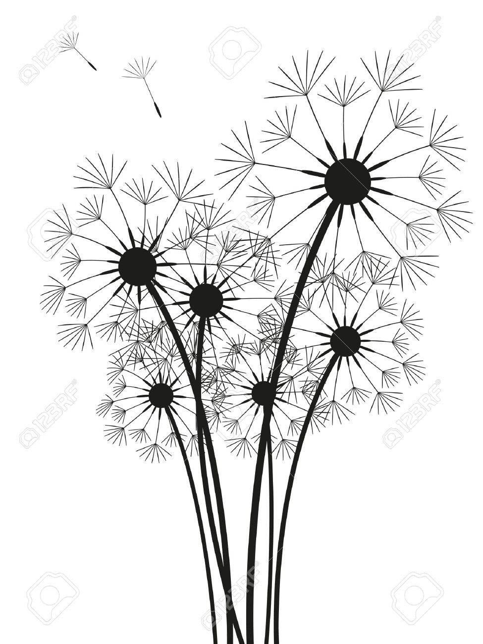 Dandelion Black And White Drawing at PaintingValley.com.
