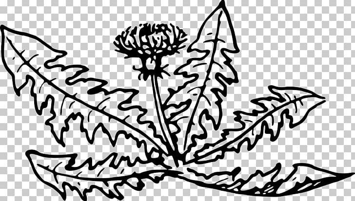 Line Art Dandelion Plant Flower PNG, Clipart, Artwork, Black, Black.